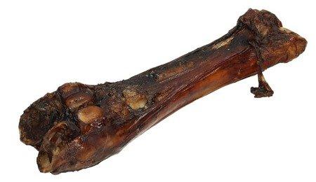 Abakus Kość wołowa z nogi
