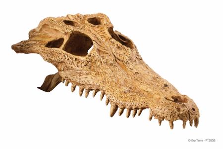 Exo Terra Crocodile Skull - Czaszka krokodyla 22 x 12 x 7 cm